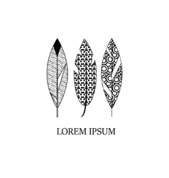 Decorative hand drawn style graphic feathers vector image