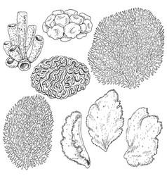 sketch of corals set vector image