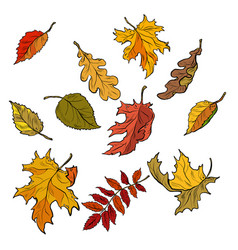Autumn leaves of trees seasonal fallen crown set vector