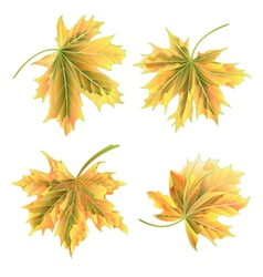 Autumn maple leaves on a white background vector