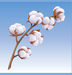 Beautiful realistic cotton branch isolated on blue vector