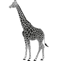 Giraffe black and white vector
