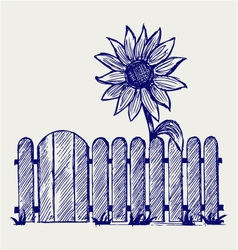 Sunflower and fence vector