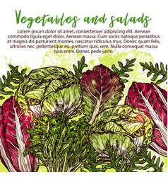 sketch poster of salads vegetables vector image