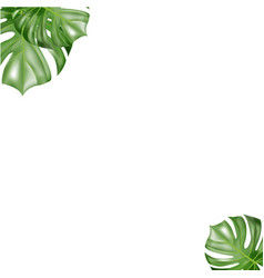 tropical paper palm leaves frame vector image