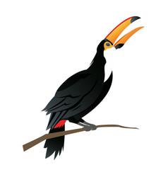 cute cartoon toucan funny cartoon tropical bird vector image