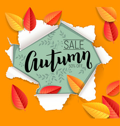 autumn sale design vector image