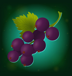 black currant with leaves icon vector image