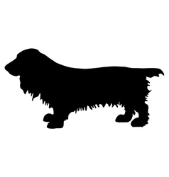 field spaniel silhouette vector image