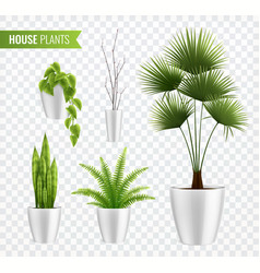 House plants in pot realistic icon set vector