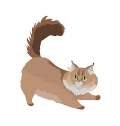 Maine coon cat flat design vector