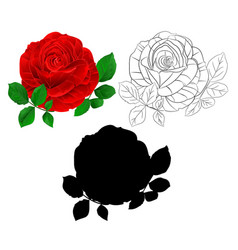 red rose and leaves natural and outline vector image