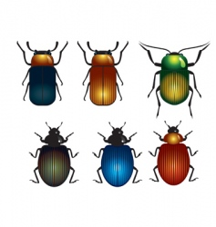Timber beetle vector