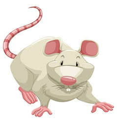 White rat vector