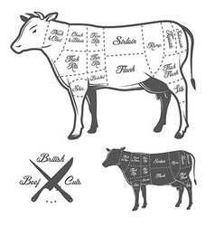British butcher cuts of beef diagram vector image vector image