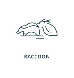 raccoon line icon linear concept outline vector image
