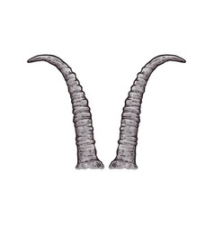 Skimitar horned oryx horns drawing isolated on vector
