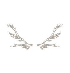 Detailed drawing deer or reindeer antlers vector
