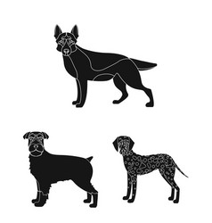 Dog breeds black icons in set collection for vector