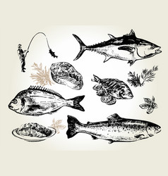 fish set drawn vector image