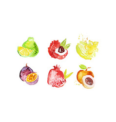 Juicy ripe tropical fruit collection pomelo vector