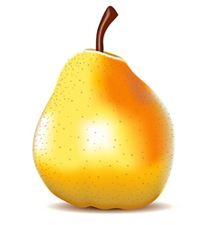 Yellow Pear Isolated on White vector