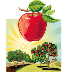 Apple orchard landscape vector