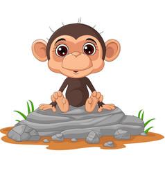 cute bamonkey cartoon sitting on rock vector image