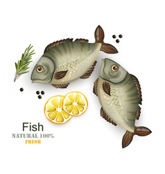 fresh fish isolated on white realistic 3d vector image