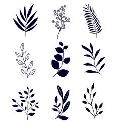 set floral elements isolated on white vector image