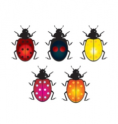ladybird beetle vector image