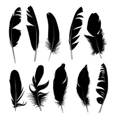 Set black isolated feathers on white background vector
