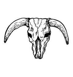 Texas longhorn bull skull vector