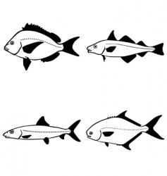 vector fish vector image