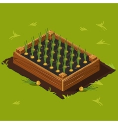 Vegetable Garden Box with Onions Set 11 vector image vector image