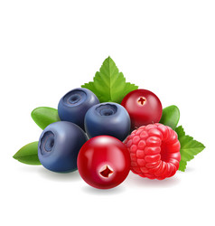 Blueberry raspberry and cranberry forest berry vector
