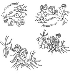 herbs spices drawn black lines on a white vector image