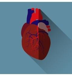 human heart icon vector image