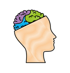 human profile with brain vector image