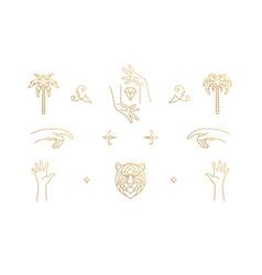 line elegant decoration design elements set vector image