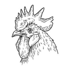 Rooster hand drawn vector