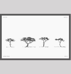 Set detail hand drawn safari tree acacia vector