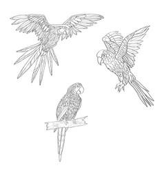 Set of parrots flying vector