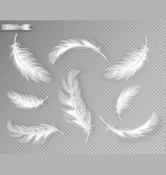 white feathers set collection realistic vector image