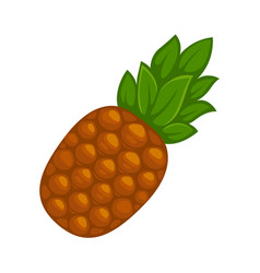 fresh whole pineapple vector image vector image