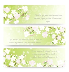 Spring banners with blossoming tree brunch vector image vector image