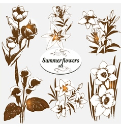 summer flowers set 2 vector image vector image