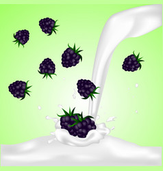 Blackberries falling into the milky splash vector