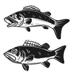set of bass fish isolated on white background vector image
