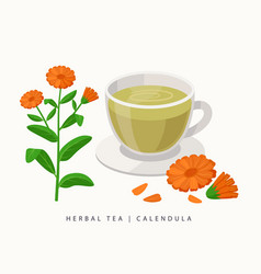 Calendula herbal tea isolated on white background vector